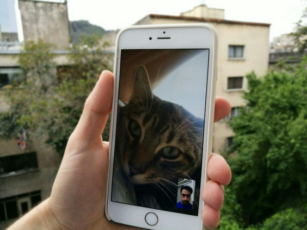 Facetime Cat